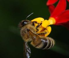 5 Fun Facts About Bees — and How You Can Help These Disappearing Insects