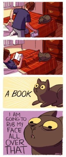 Cats and books