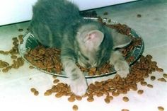 Photo of sleepy kitten for fans of Cute Kittens 9835304 Sleeping Animals, Sleeping Kitten, Sleeping Beauty, Cute Kittens, Cats And Kittens, Cute Funny Animals, Funny Cats, Funny Squirrel, Photo Chat
