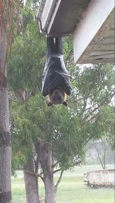 Some people wake up to birds singing, in Australia they wake up to this.