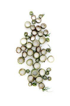field-thistle stem (mary jo hoffman)