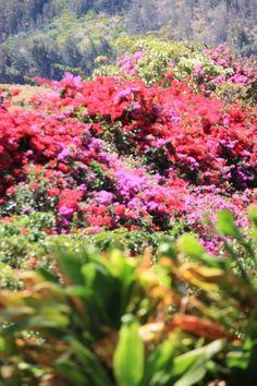 Pretty Hawaiian flowers. Maui.