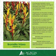 Hoje é dia da nossa sessão #comocuidar para todos saberem como manter suas #plantas saudáveis! Conheça a Bromélia Vrízea!
