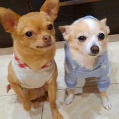 Minka on the left and Butterz on the right pose for one of their outfits Minka, Poses, Friends, Animals, Outfits, Figure Poses, Amigos, Animales, Suits