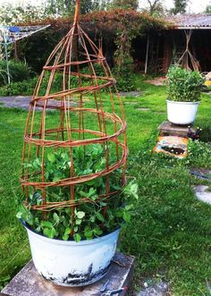 This would be pretty around my hydrangea to keep it from getting eaten by the deer. Garden Whimsy, Love Garden, Garden Art, Container Gardening, Gardening Tips, Vertical Garden Design, Willow Weaving, Plant Supports, Backyard Paradise