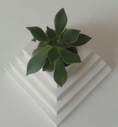 www.spazio7.co.uk planters and wall planters,living art,vertical garden,interior design