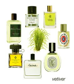 Vetiver scents from earthy to bright: Vetiver Veritas, Konig, Fat Electrican, Vetyverio, Flashback, Mona di Orio Vetyver, and Vetiver Fatal. #niche #perfume #luckyscent