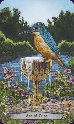 Animal-Totem-Tarot-6:The Animal Totem Tarot features animals from around the world in their natural sometimes not so natural) habitats. Created by Eugene Smith, Leeza Robertson Tarot Deck - - Llewellyn 2016