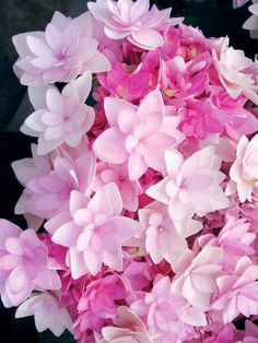 Flores Rosas para un splash de color