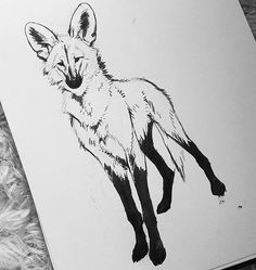 I'm a day behind due to being ill yesterday so will just make two at once later. But here's a comfort zone ink creature, maned wolf! One of my favourite animals for sure #manedwolf #ink #inktober #inktober2016 #traditionalart