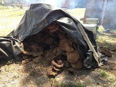 Combustible utilisé pour cuire la poterie de Sejnane : La bouze de vache :-). #poteriesejnane Cow, Pottery
