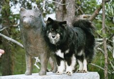 The sculpture of a Finnish Lapphund in Hetta, Kilpisjärvi Finland.