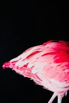 Flamingo lifestyle
