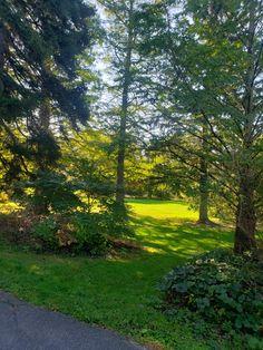 Park in Ringwood