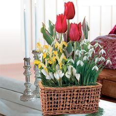 Elegant Winter Bulb Garden: Make this holiday season truly special with this gorgeous bulb garden that combines some of nature's most beautiful and easy-to-grow blooms! Tall bright red Tulips are perfectly complemented by brilliant yellow Dwarf Irises and crisp white Snowdrops and Crocuses. The 18 bulbs arrive planted in an attractive willow basket that you'll want to use again and again. -- This product is no longer available, however click the image to see this year's Bulb Garden Gift…