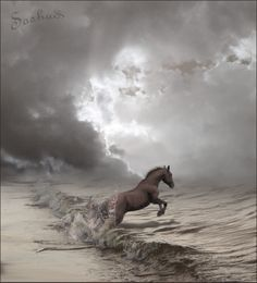 grey... atmospheric picture of horse running into the sea