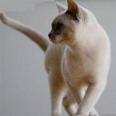 Как избавиться от запаха кошачьей мочи, как вывести запах кошачьей мочи, чем выводить кошачью мочу