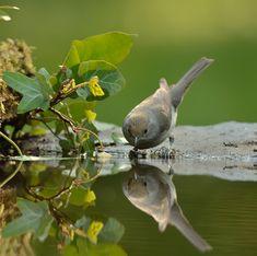 Mirroring Birdie by Csilla Zelko, via 500px