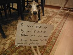 "Dog Confessions  ""I was beat up by an 8 week old kitten and ran away from bunnies.  But I bark at pitbulls!"""