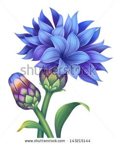 illustration of blue cornflower with green leaves isolated on white - stock photo