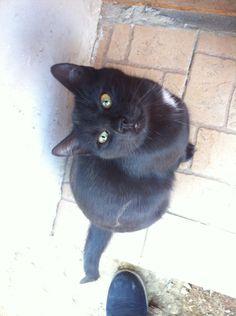 My Black Cat. So cute and so beautiful. <3
