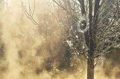 Misty Morning by JacquelineBarkla on DeviantArt