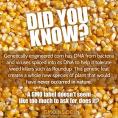 FACT: 86% of corn is now genetically engineered. GMOs were not created to feed the world, they were created to sell more chemicals!