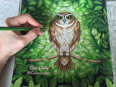 SECRET GARDEN   The Owl's Background Coloring   Coloring With Colored Pe...