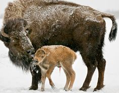 Yellowstone National Park - Photo by Len Tillim