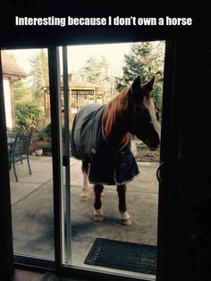One of the Best collections of funny animal pictures,Cute funny animals, Funniest animals you'll see all day. Just look Funny Web Zone Best Animal Pictures Picdump of The Day 7 that will make you smile 30 funny animal pics. Funny Horse Memes, Funny Horses, Funny Animal Memes, Cute Funny Animals, Funny Animal Pictures, Funny Cute, Funny Memes, Hilarious, Animal Pics
