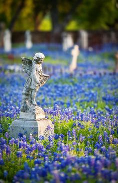 Sometimes a visit to an old cemetary can provide inspiration for your garden.  The statuary and plantings of old favorites in such a peaceful surrounding provide for serene tranquility. Fredericksburg, Texas