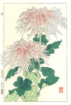 Artist Osuga Yuich Japanese Woodblock Print Name Kiku (Chrysanthemum) Approx Image Size Height cm x Width cm (H x W Date Originally published in Showa mid-term era by Unsodo. This is a later edition from the original blocks. Condition Only perfect Illustration Botanique, Illustration Art, Illustrations, Botanical Drawings, Botanical Prints, Gravure Photo, Art Japonais, Japanese Flowers, Japanese Painting