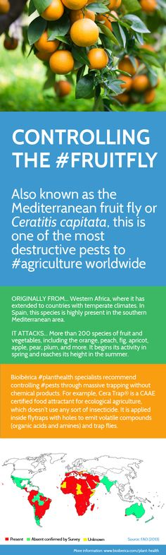 Controlling the #fruitfly #agriculture #plantstress #planthealth