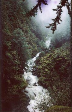 .A stream runs through the forest...