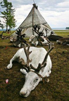 with reindeer