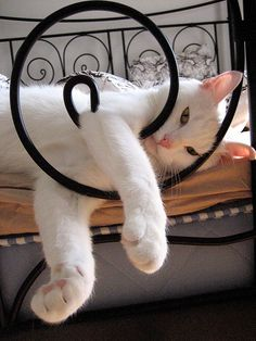 A Cats Life by zedling, via Flickr