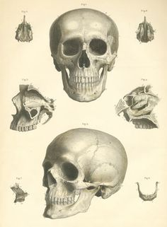 Skull Plate by Dr. Bock