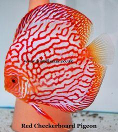 Aquarist Classifieds