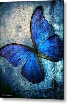 Butterfly Metal Print By Mark Ashkenazi More