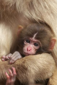 Baby 2011 by Masashi on 500px