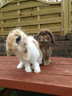 My super cute rabbits - Biscuit and Cola!