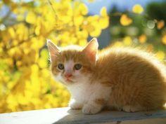 Oh god I have kitten fever...