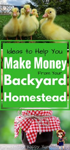Make an income from your backyard homestead, no matter how much space you're working with. More than 20 ideas on how you can make money from your homestead