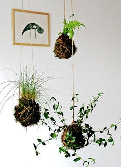 diy kokedama string garden by aura scaringi via designsponge. kokedama are Japanese moss balls made with peat and bonsai soil and not so hard to make at all.