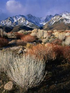 Mountains and Desert Flora in the Owens Valley, Inyo National Forest, California, USA