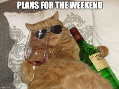 PLANS FOR THE WEEKEND | image tagged in fat drunk cat | made w/ Imgflip meme maker