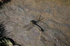 Coleóptero sobre piedra