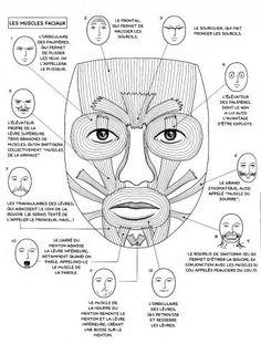 Anatomie et expressions
