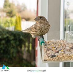 Doğal ortamdaki kuşları beslemeyi unutmayın. 🙏 #pethayat #pethayatcom #petshop #kuş #uçankuş #güzelkuş #renklikuş #muhabbetkuşu #yıldızparkı #gülhaneparkı #floryaatatürkormanı #zeytinburnutıbbibitkilerbahçesi #maçkaparkı #fethipasakorusu #fenerbahçeparkı #nezahatgökyiğitbotanikbahçesi #mihrabattabiatparkı #polonezköytabiatparkı #baltalimanıjaponbahçesi #göztepetabiatparkı #neşetsuyutabiatparkı #atatürkarboretumuparkormantabiatparkı #taksimgeziparkı #bakırköybotanikpark… Bird Feeders, Bangkok, Parrot, Outdoor Decor, Animals, Parrot Bird, Animales, Animaux, Animal