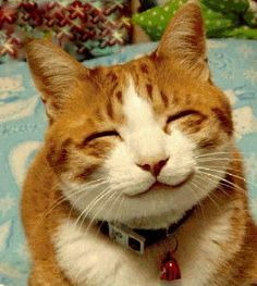 Just Smile! :) #Happy #Feline #Friends